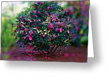 Camellia Ball Greeting Card