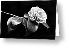 Camellia Flower In Black And White Greeting Card by Jennie Marie Schell