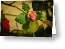 Camellia Greeting Card by Marco Oliveira