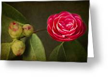 Camellia Greeting Card by Rebecca Cozart