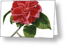 Camellia Greeting Card by Richard Harpum