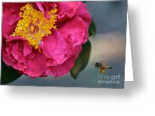 Camellia With Bee Greeting Card