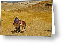 Camels Nuzzling On The Giza Plateau-egypt  Greeting Card