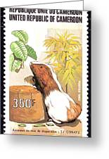 Cameroon Stamp Greeting Card