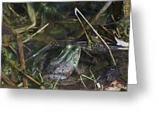 Camo Frog Ninja Greeting Card