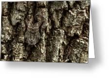 Camo Moth Greeting Card