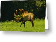 Camoflaged Elk With Shadows Greeting Card