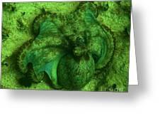 Camoflauged Octopus Greeting Card