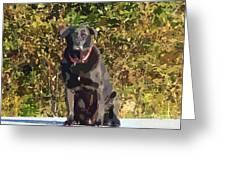 Camouflage Labrador - Black Dog - Retriever Greeting Card