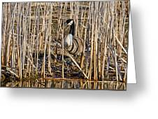 Camouflaged Canada Goose Greeting Card