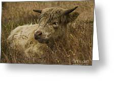 Camouflaged Cow Greeting Card