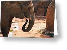 Camouflaged Elephant Greeting Card