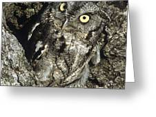Camouflaged Screech Owl Greeting Card