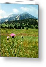 Chautauqua Wildflowers Boulder Greeting Card