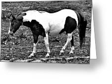 Camp Horse Greeting Card