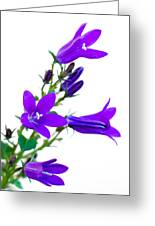 Campanula Flowers Greeting Card