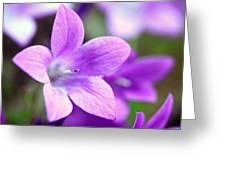Campanula Portenschlagiana Blue Bell Flowers Closeup Greeting Card