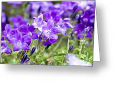 Campanula Portenschlagiana Blue Bell Flowers Greeting Card