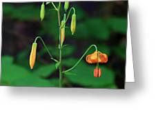 Campground Flower Greeting Card