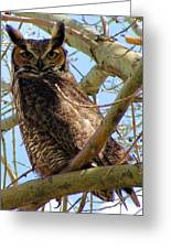 Campus Owl Greeting Card