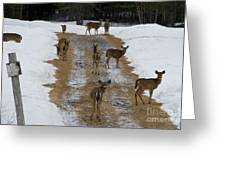 Can Deer Read Greeting Card
