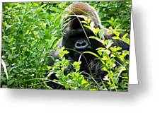 Can I Help You? Greeting Card