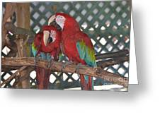 Can You Get That Itch For Me? Greeting Card