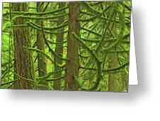 Canada, British Columbia, Mcmillan Greeting Card