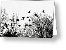 Canada Geese Flight Silhouette Greeting Card