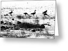 Canada Geese In Black And White Greeting Card