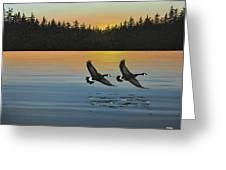Canada Geese Greeting Card by Kenneth M  Kirsch
