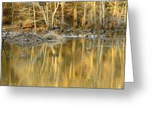 Canada Geese On A Golden Morning Greeting Card