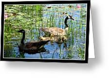 Canada Geese On Lily Pond At Reinstein Woods Greeting Card