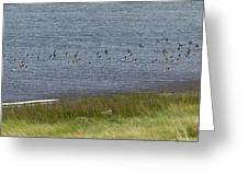 Canada Geese Panorama-signed-8x38 Greeting Card