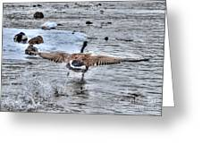 Canada Goose - The Runway Greeting Card