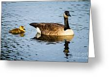 Canada Goose And Gosling Greeting Card