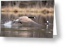 Canada Goose Attitude Greeting Card