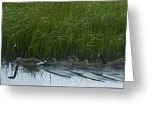 Canada Goose Family   #7453 Greeting Card