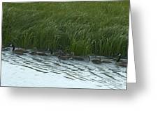 Canada Goose Family   #7478 Greeting Card