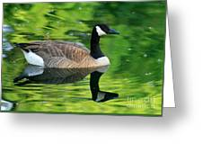 Canada Goose On Green Pond Greeting Card