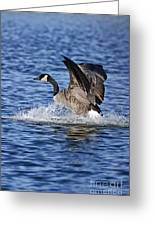 Canada Goose Pictures 111 Greeting Card