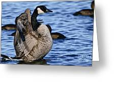 Canada Goose Pictures 84 Greeting Card