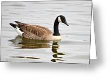 Canada Goose Reflecting In Calm Waters Greeting Card