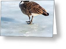 Canada Goose Web Prints Greeting Card