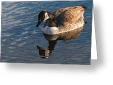Canada Goose Winter Swim Greeting Card