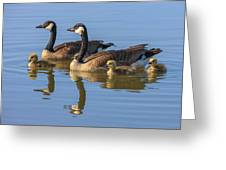 Canada Goose With Chicks Greeting Card