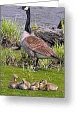 Canada Goose With Young Greeting Card