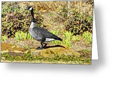 Canadaian Goose Greeting Card