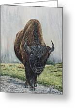 Canadian Bison Greeting Card