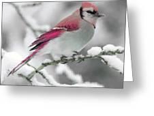 Canadian Cardinal Greeting Card